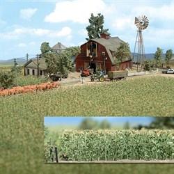 1202 Кукурузное поле - фото 13559
