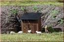42636 Загончик для овец (2шт.) (H0/TT)