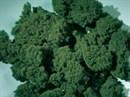 76977 Флок темно-зеленый 1000 мл