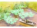14114 Водяные лилии (60 шт.)